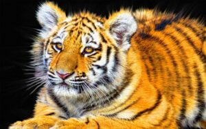Amazing Animal Photo 173