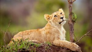 Wild Life Animal Images 28