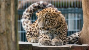 Wild Life Animal Images 74