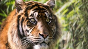 Wild Cat Wallpapers HD 17