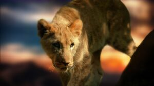 Wild Cat Wallpapers HD 25