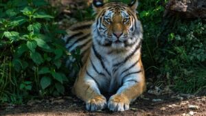 Wild Life Animal Images 12