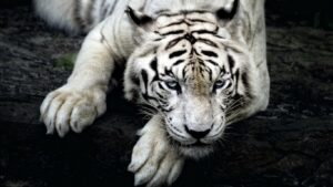 Wild Life Animal Images 23