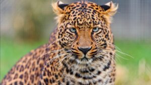 Wild Life Animal Images 42