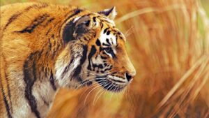Wild Life Animal Images 53