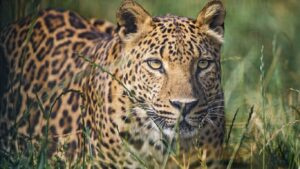 Wild Life Animal Images 75